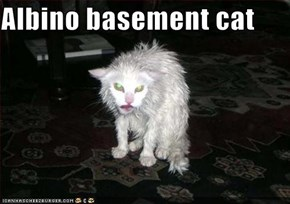 Albino basement cat