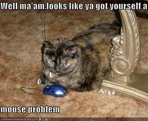 Well ma'am,looks like ya got yourself a  mouse problem