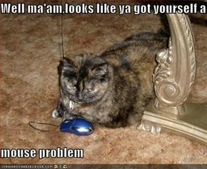 Well ma'am,looks like ya got yourself a  mouse problem