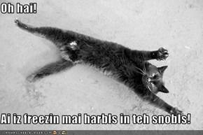 Oh hai!  Ai iz freezin mai harbls in teh snobls!