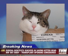 Breaking News - EUREKA SIENTESTS SUKSEED IN SAVING KITTEH HEAD WIF OUT BODY - TRANSPLANT OPSHUNS CONSIDERED