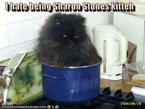 I hate being Sharon Stones kitteh