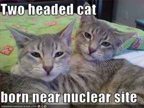 Two headed cat  born near nuclear site