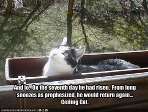 And lo.  On the seventh day he had risen.  From long snoozes as prophesized, he would return again...