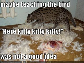 "maybe teaching the bird ""Here kitty kitty kitty!"" was not a good idea"