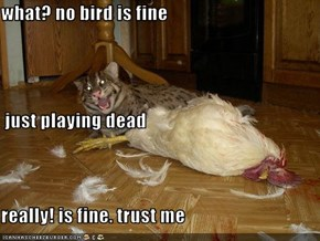 what? no bird is fine   just playing dead      really! is fine. trust me