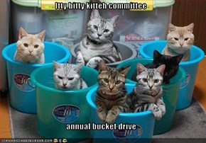 Itty bitty kitteh committee  annual bucket drive