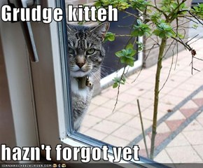 Grudge kitteh  hazn't forgot yet