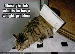 Obesity kitteh