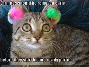 Earmites should be removed early  before they start having rowdy parties