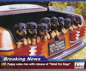 "Breaking News - Puppy sales rise with release of ""Hotel For Dogs"""