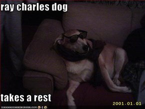 ray charles dog  takes a rest