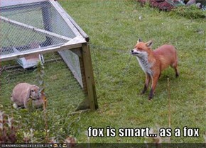 fox is smart... as a fox