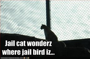 Jail cat wonderz where jail bird iz...