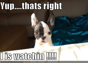 Yup....thats right  I is watchin !!!!