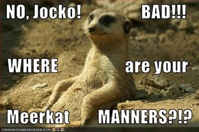 NO, Jocko!                 BAD!!!   WHERE                   are your    Meerkat        MANNERS?!?