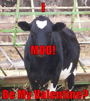 I MOO!    Be My Valentine?
