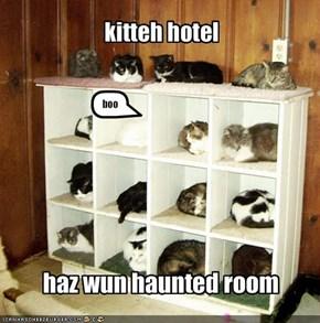 kitteh hotel