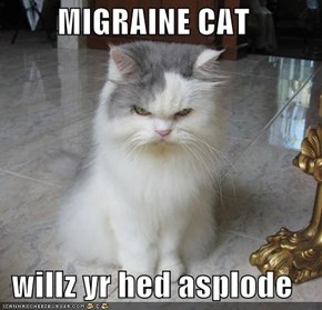 MIGRAINE CAT  willz yr hed asplode