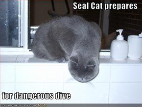 Seal Cat prepares   for dangerous dive