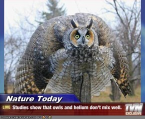 Nature Today - Studies show that owls and helium don't mix well.