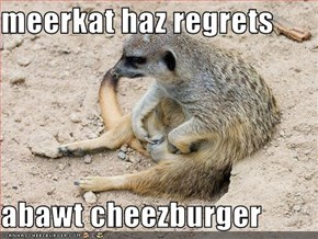 meerkat haz regrets  abawt cheezburger