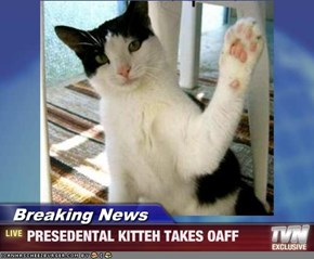 Breaking News - PRESEDENTAL KITTEH TAKES OAFF