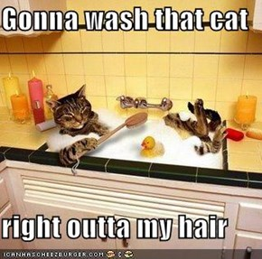 Gonna wash that cat  right outta my hair