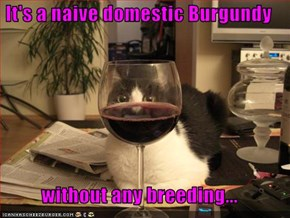 It's a naive domestic Burgundy  without any breeding...
