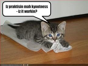 Iz praktisin mah kyootness - iz it wurkin?