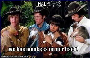 HALP!  we has monkees on our back!