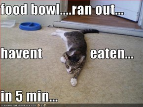 food bowl....ran out... havent                 eaten... in 5 min...