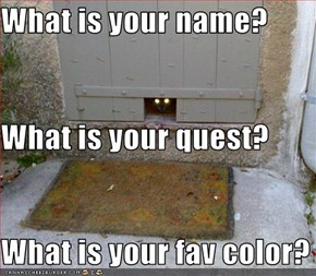 What is your name? What is your quest? What is your fav color?