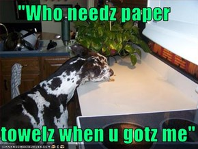 """Who needz paper  towelz when u gotz me"""