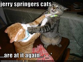 jerry springers cats  ...are at it again...-_-'