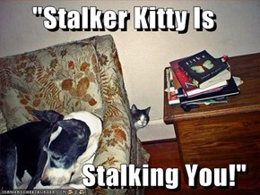 """Stalker Kitty Is  Stalking You!"""