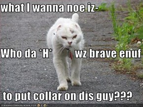 what I wanna noe iz- Who da *H*          wz brave enuf  to put collar on dis guy???