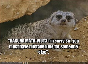 """HAKUNA MATA-WUT? I'm sorry Sir, you must have mistaken me for someone else""."