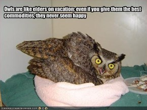 Owls are like elders on vacation: even if you give them the best commodities, they never seem happy