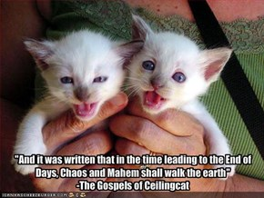 """And it was written that in the time leading to the End of Days, Chaos and Mahem shall walk the earth""