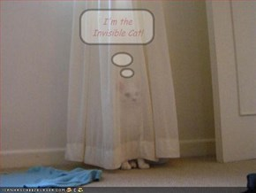 I'm the Invisible Cat!