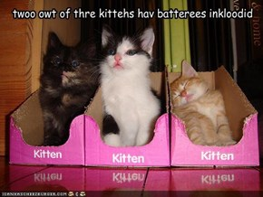 twoo owt of thre kittehs hav batterees inkloodid