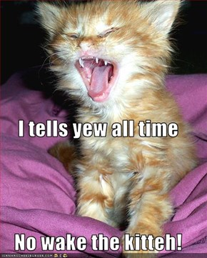 I tells yew all time No wake the kitteh!