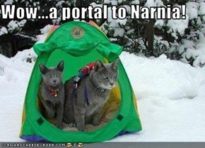 Wow...a portal to Narnia!