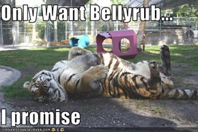 Only Want Bellyrub...  I promise