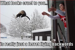 What looks cruel to you...  is really just a ferret flying backwords