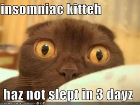 insomniac kitteh   haz not slept in 3 dayz