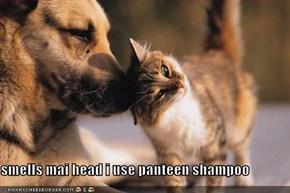 smells mai head i use panteen shampoo
