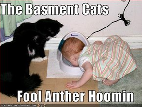 The Basment Cats  Fool Anther Hoomin
