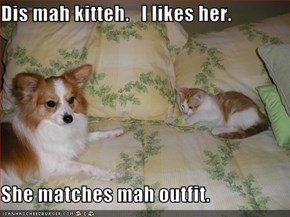 Dis mah kitteh.   I likes her.  She matches mah outfit.